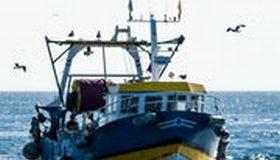 Ressources marines : la pêche française doit encore s'améliorer