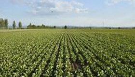 Pesticides : les Sages sanctionnent une concertation locale biaisée