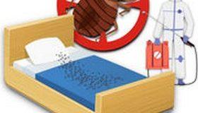 Punaises de lit (infographie) : vos solutions pour en venir à bout