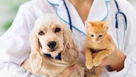 Vétérinaires : les différences de tarifs entre régions se creusent